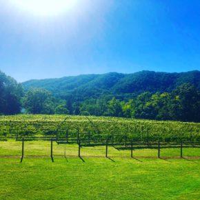 Rock Roadhouse Winery